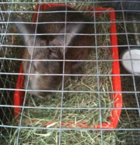 rabbit on nest