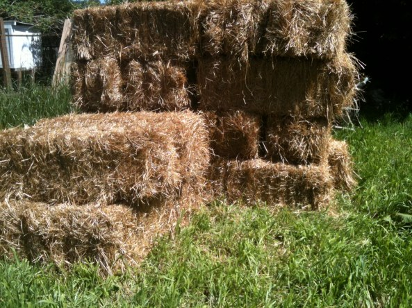 straw bales for my straw bale garden