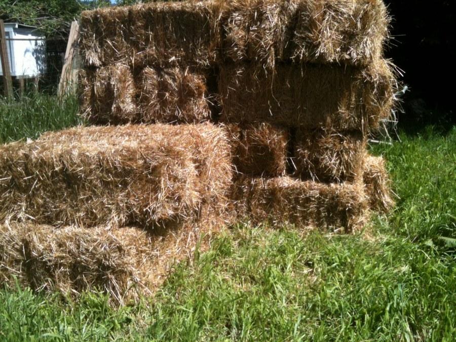 straw bales for my straw bale garden