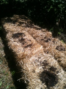 compost on straw bales